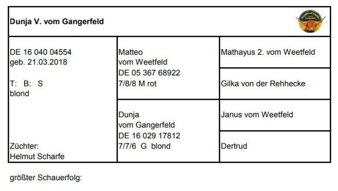 Pedigree Dunja V. vom Gangerfeld