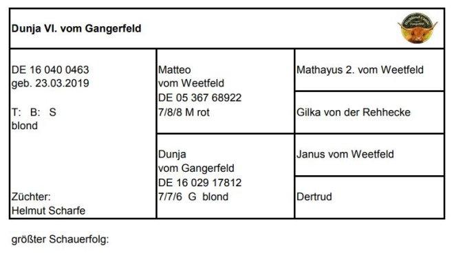 Pedigree Dunja VI. vom Gangerfeld