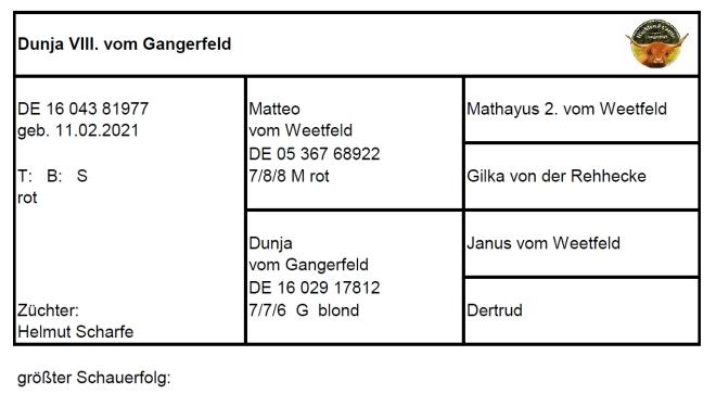 Pedigree Dunja VIII. vom Gangerfeld