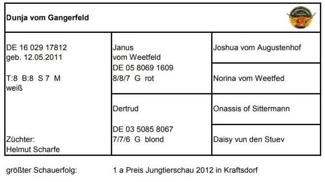 Pedigree Dunja vom Gangerfeld